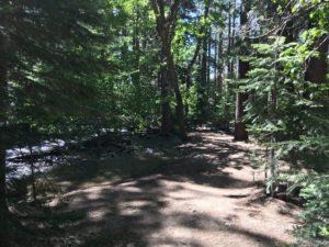 ガリーナ公園で里山散策 ③ White Creek Trail at Galena Creek Reginal Park